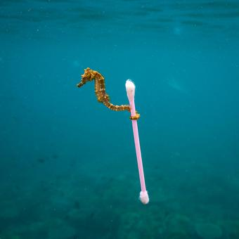 The finalists of the Wildlife Photographer of the Year have been unveiled