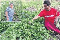 El Nino affects crops