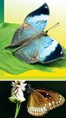 Maharashtra's ode to the butterfly