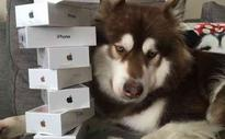 China's 'richest dog' gets 8 iPhone 7s