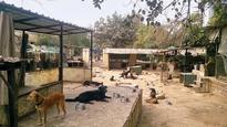 Facing severe cash crunch, SPCA blames Noida Authority for delay