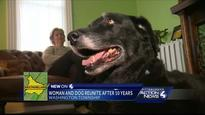 Long-Assumed-Dead Dog Returns Home After 10 Years
