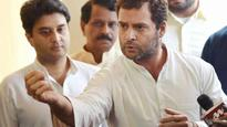 Youth Congress activists slaughter calf in Kerala, red-faced Rahul Gandhi calls incident 'barbaric'