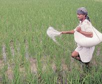 Dec roll out of fertiliser DBT in Punjab, Haryana, Chhatisgarh, MP, Andhra