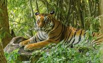 Tiger Census Programme Begins In Periyar Tiger Reserve