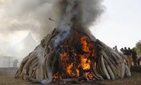 World's largest ivory bonfire ignited by Kenya Wildlife Service at anti-poaching summit