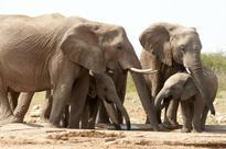 Report highlights global phenomenon of wildlife poaching