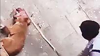 Dog killed on DTU campus, outraged activists file complaint