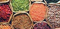 Procurement of Rabi pulses reaches 68,000 MT