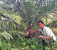 National Mission on Oilseed & Oil Palm in Goalpara