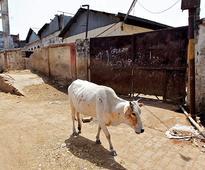 Uttar Pradesh mulls introducing cow