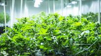 Scientific review of marijuana supports regulation, not criminalization