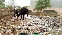 Garbage piling on in Om Vihar phase I