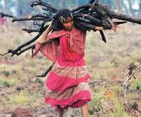 The Great Indian Land Grab: In the name of compensatory afforestation