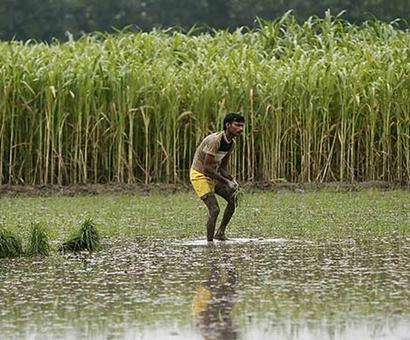 Should India stop growing sugarcane?