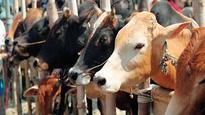 Gau rakshaks thrash five in Faridabad