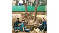 Ahmedabad city woman shows the way; successfully transplants two trees