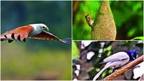 Come V-Day, Mumbaikars will fan out to date birds