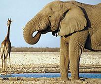 EU set to vote no to ban of ivory trade