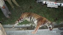 Villagers kill Royal Bengal tigress, chop off its body parts in Assam