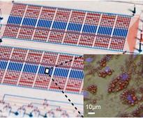 Analysis Of Adipose Tissue on Microfluidic Chips