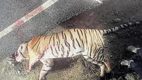 Tiger killed in road accident in Haridwar