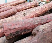 Youths lured with cash turn to red sanders smuggling