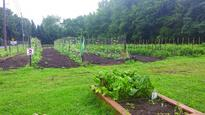 Kent County gardens benefit from Delaware Ag Department grants
