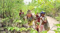 Villagers preserve Sukna hill forests to sustain livelihood