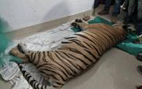 Odisha: Inching closer to extinction, another Royal Bengal tiger dies