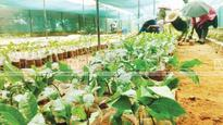 Saplings ready for distribution on World Environment Day