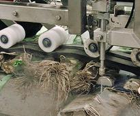 Vegetable cutter with water jets processes quickly and hygienically