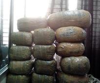 DRI seizes 1161 kg ganja from truck, one held