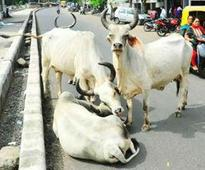 One in 6 booked for cow crimes is Hindu
