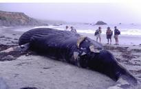 El Nino to blame for dead sea animals