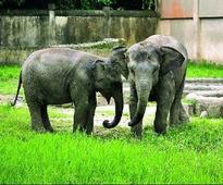 'Implement laws to curb man-animal conflict'