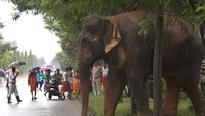 Nepal fence to keep elephants away may escalate into political row