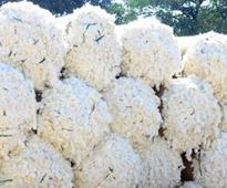 Govt mulls Rs 160/qtl hike in cotton MSP for 2017-18