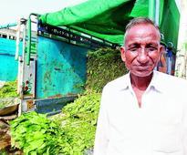 Under debt, farmers dump crops