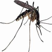 Sting of dengue at a feverish high in Bangalore