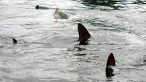 State warns of October peak in Hawaii shark attacks