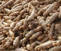 Cheaper varieties from AP hurt Erode turmeric
